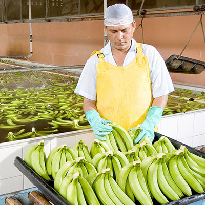 GIOIA® Bananas must meet strict criteria and they go through a complete quality check. Various checks are carried out on both the outside and the inside of the fruit.